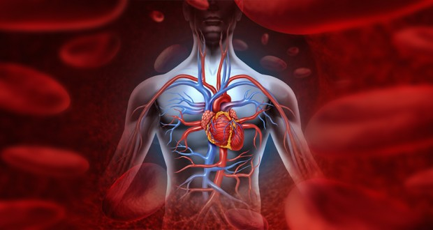 How to Effectively Improve Blood Circulation