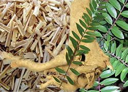 trimassix-review-ingredients-tongkat-ali